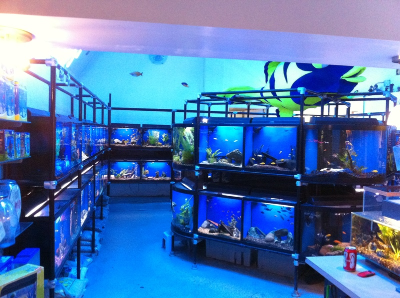 Tropical fish birds small animals ponds reptiles for Tropical fish shop